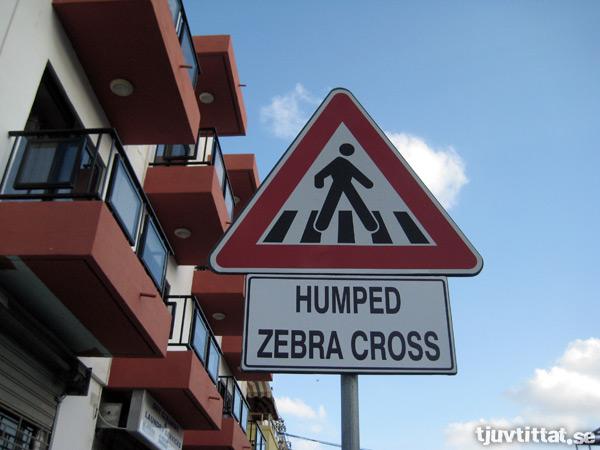 Humped zebra cross