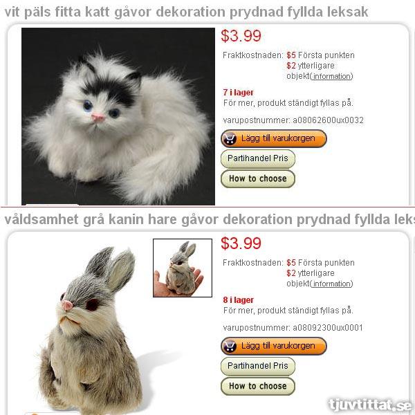 Vit päls fitta katt, samt våldsamhet grå kanin hare
