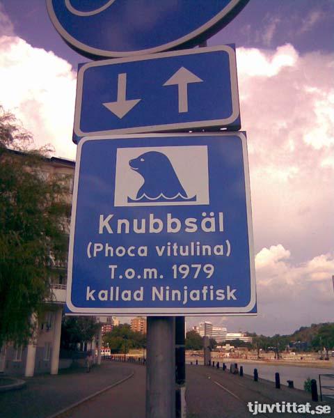 Knubbsäl, t.o.m. 1979 kallad Ninjafisk