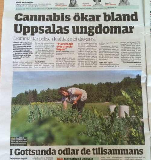cannabis_uppsala