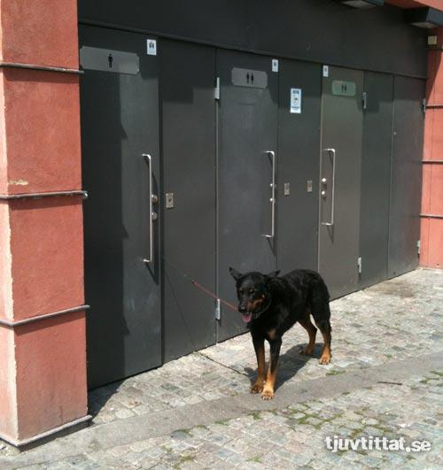 hund_malmo