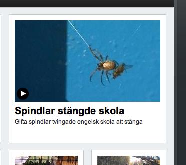 Gifta spindlar tvingade engelsk skola att stänga