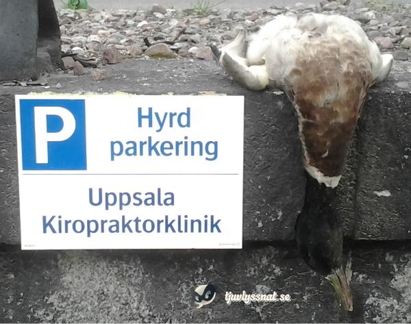 uppsala_kiropraktorand1
