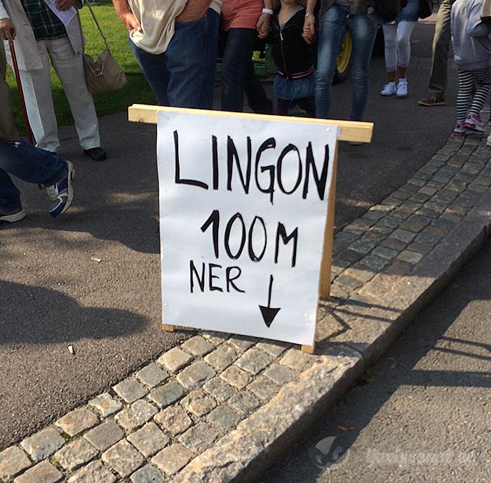 Lingon 100 m ner